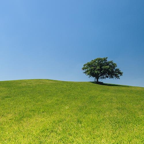 Ein alleinstehender Baum auf einer grünen Wiese mit strahlend blauem Himmel